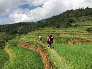 טרסות בטיול לוייטנאם
