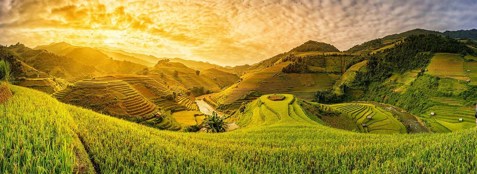 שדות וייטנאם
